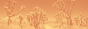 How I Met Gaia Founder,Jirka Rysavy, Wandering in the Desert