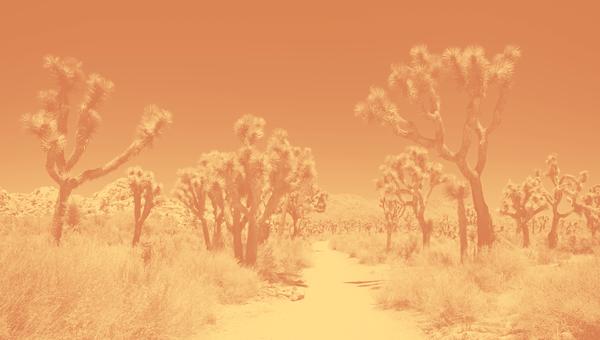 I met Gaia FounderJirka Rysavy while Wandering in the Desert